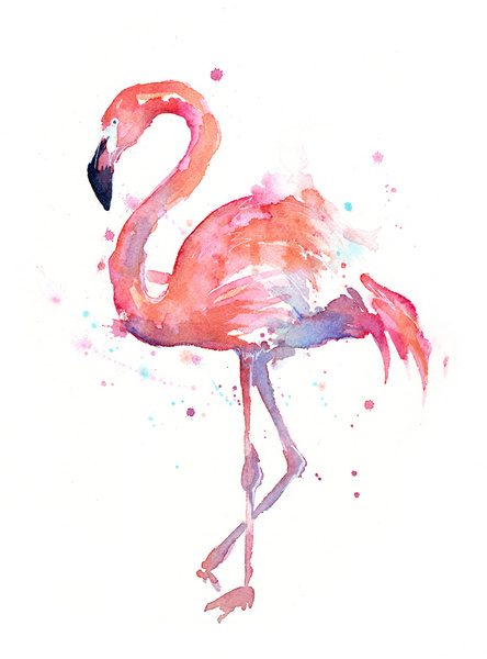 Flamingo by Olechka